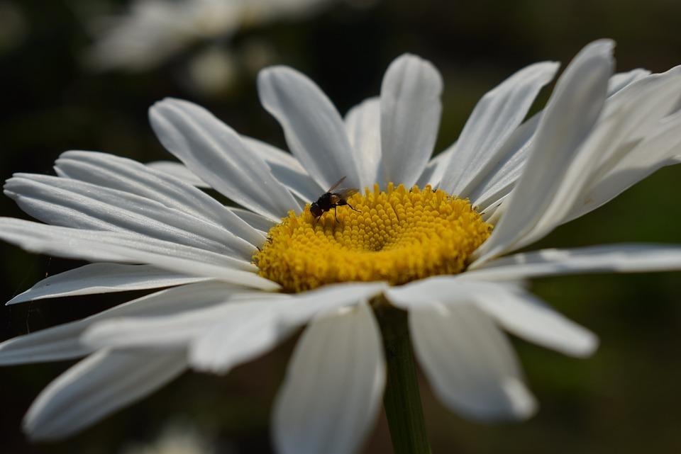 Nature, Plant, Flower, Petal