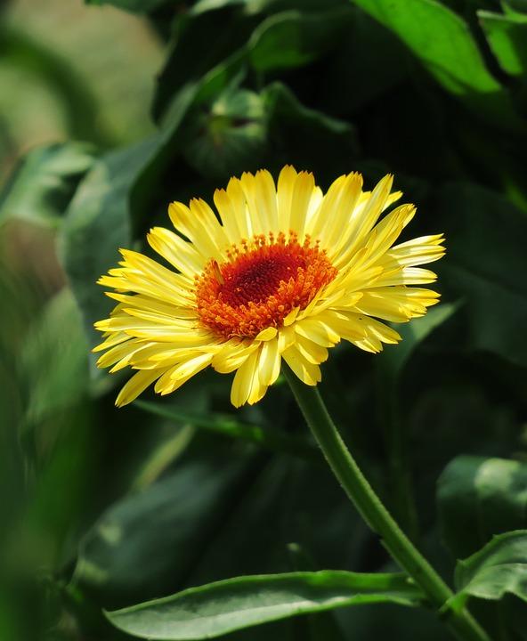 Plant, Nature, Flower, Summer, Petal, Bloom, Leaf