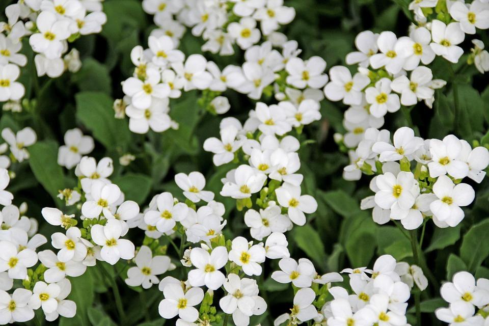 White Flower, Nature, Summer, Plant, Garden, Petal