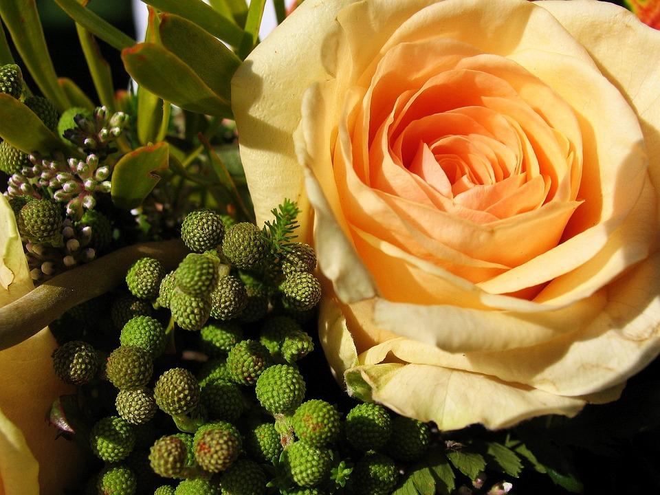 Flower, Plant, Bouquet, Rose, Orange, Petal, Petals