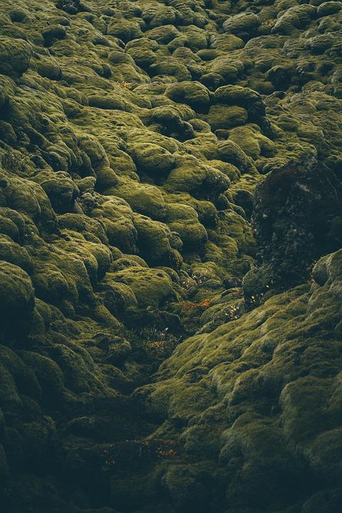 Nature, Photography, Iceland, Moss, Plant