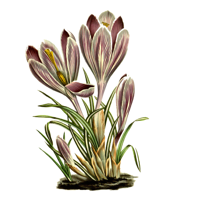 Flowers, Pink, Vintage, Nature, Plant, Spring, Flora