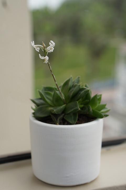 Plant, Flower, Succulent, Pot, Spring, Nature