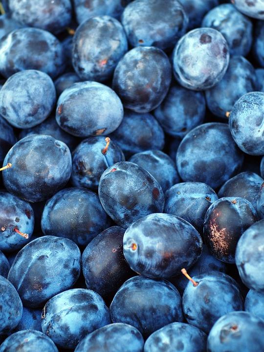 Plum, Fruit, Blue, Purple, Sweet, Plant, Berries