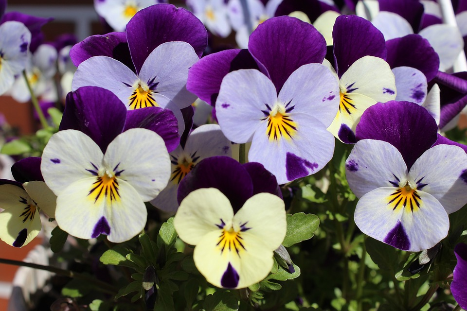 400–500, Plant, Flowers, Purple, White, Nature, Pretty
