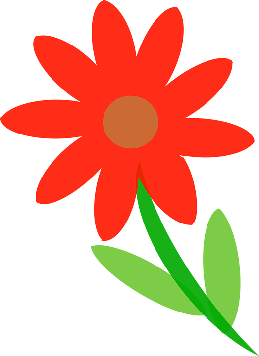 Flower, Red, Plant