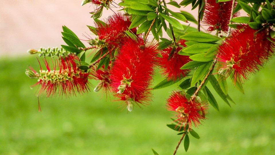 Red Flowers, Nature, Plant, Leaf, Tree, Summer, Trees