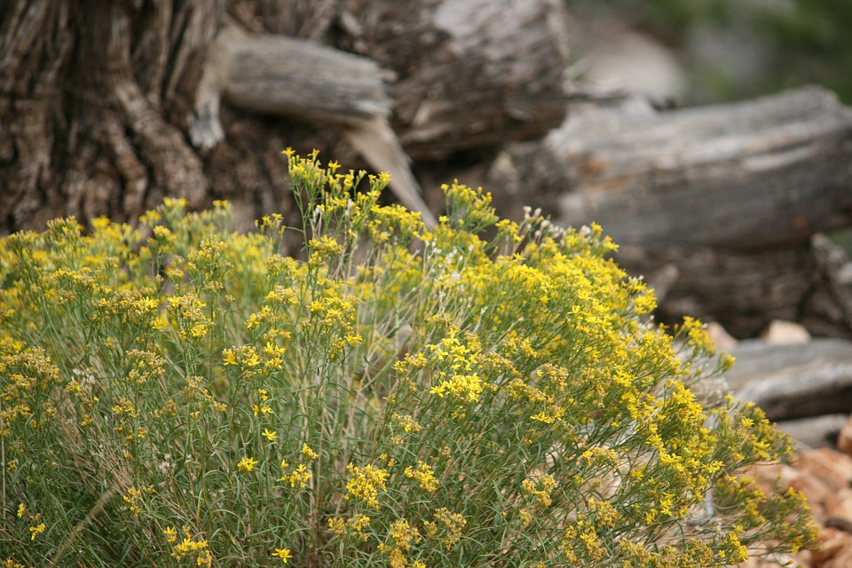 Plant, Yellow, Desert, Sand, Bush, Leaf, Bright, Color