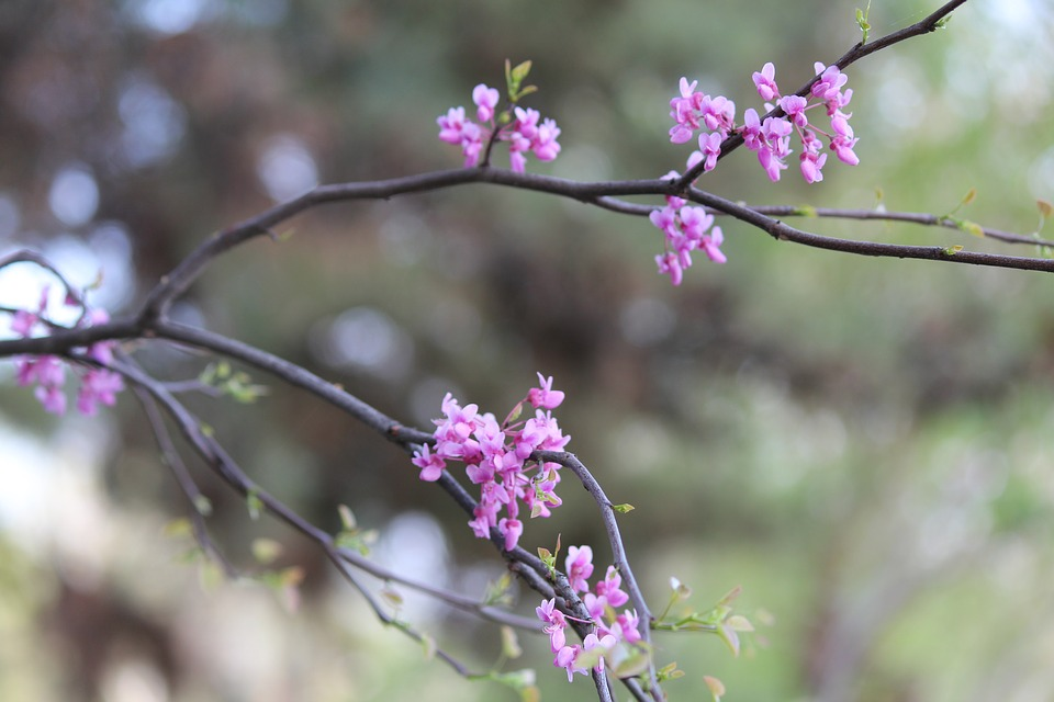 Flower, Nature, Plant, Branch, Tree, Season, Outdoors