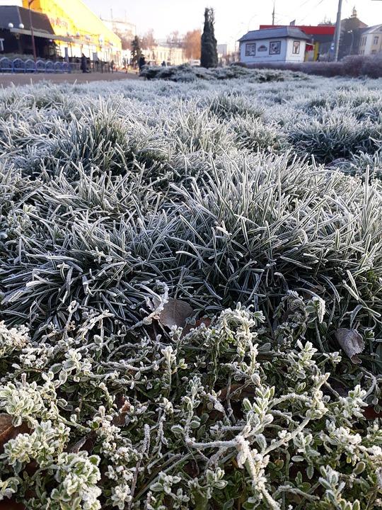 Nature, Leann, Plant, Winter, Grass, Season, Frozen