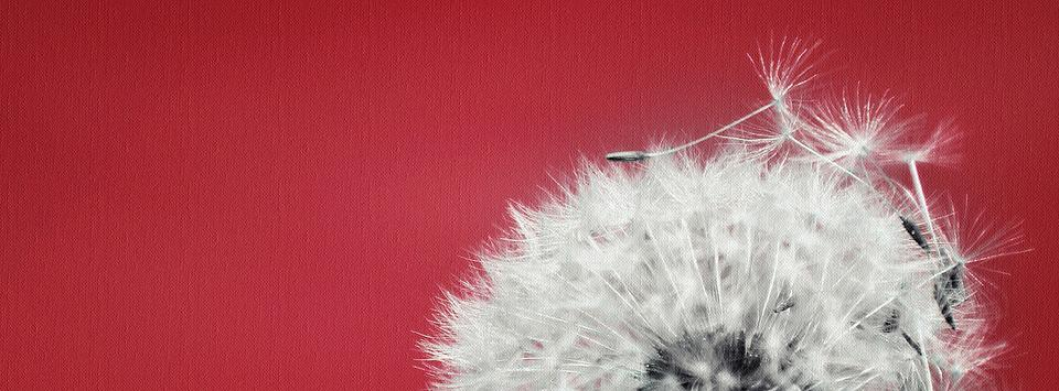 Dandelion, Pointed Flower, Flower, Seeds, Plant, Nature