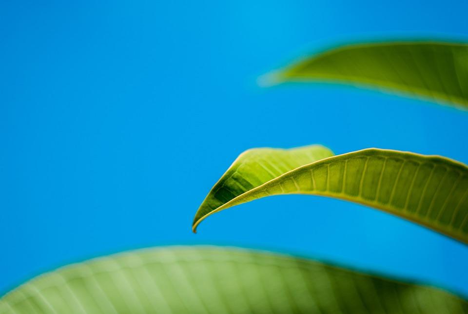 Leaf, Green, Sky, Plant, Fresh, Closeup, Summer, Nature