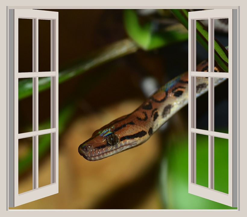 Snake, Window, Adam And Eve, Background, Plant, Apple