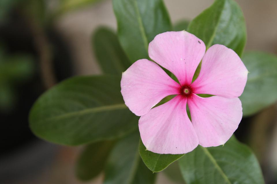 Flower, Spring, Nature, Floral, Plant, Bloom, Green