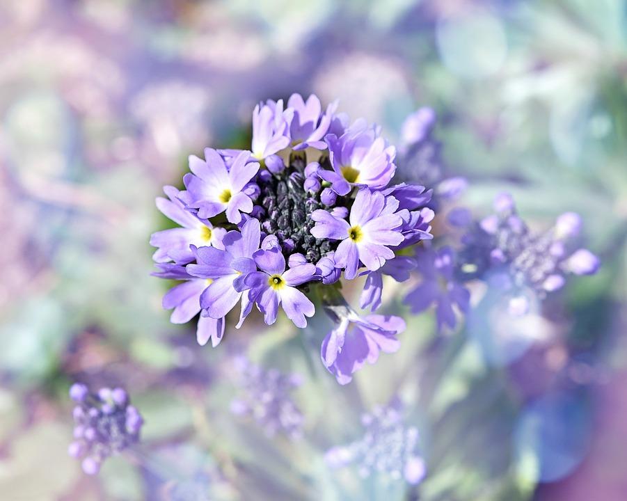 Drumstick, Half Closed, Flower, Plant, Spring Flower