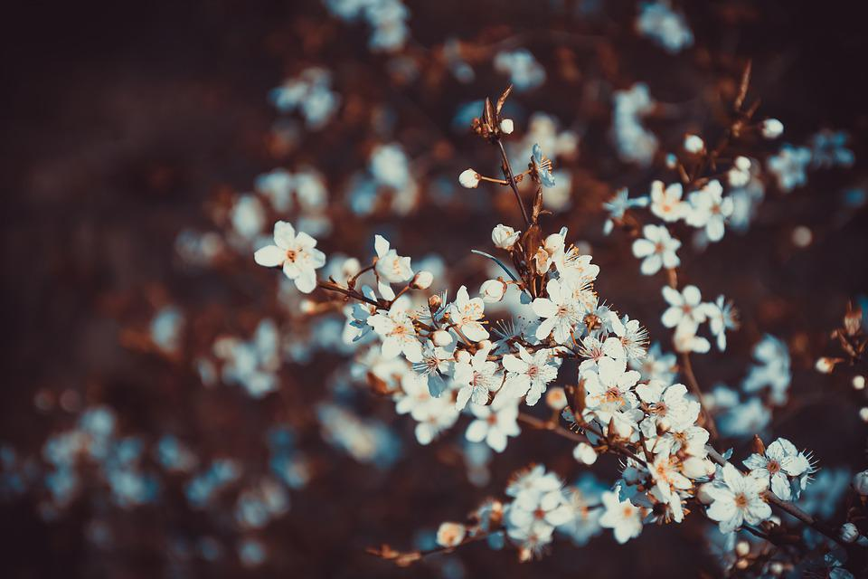 Flowers, Summer, Nature, Spring, Plant, Flora, Lavender