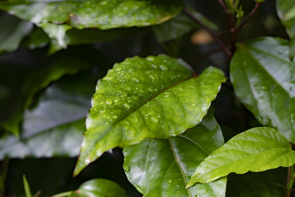 Leaf, Green, Nature, Leaves, Spring, Plant, Texture