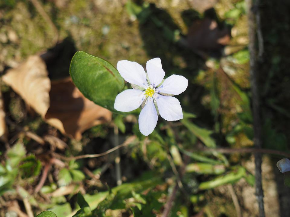 Flower, Spring, Nature, Plant