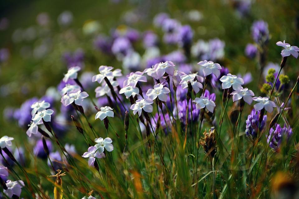 Purple Flowers, Decorative, Flower, Spring, Plant