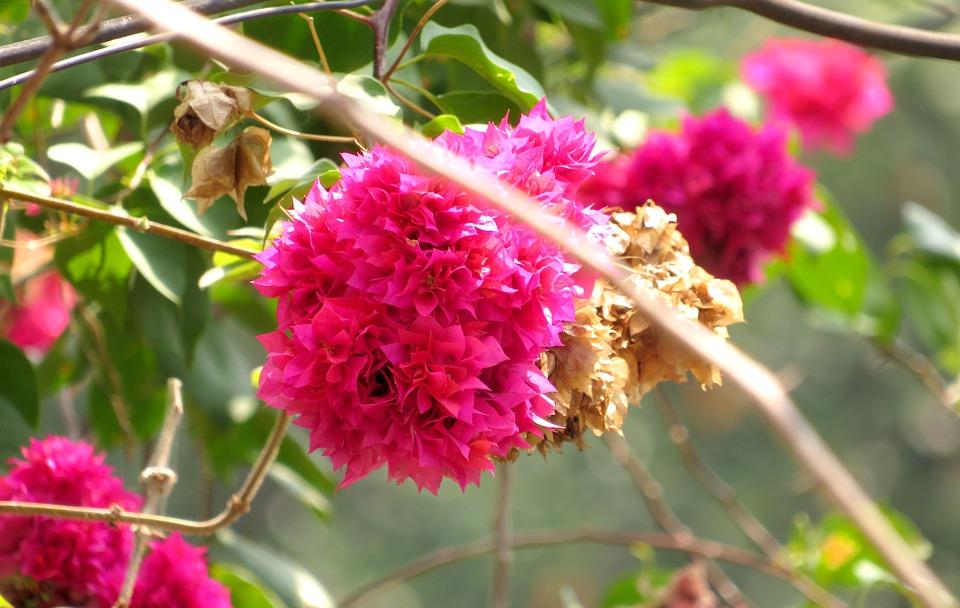 Purple, Flowers, Nature, Plant, Spring, Garden