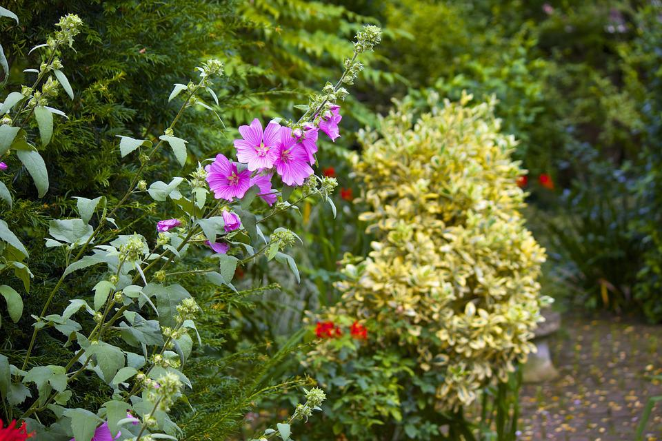 Flower, Plant, Garden, Summer, Gardening, Spring, Leaf