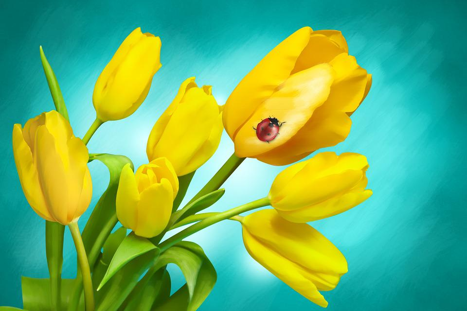 Flowers, Spring, Tulips, Plant, Meadow, Holidays