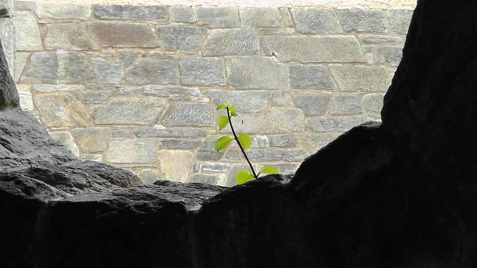 Plant, Nature, Stone, Live, Branch, Leaves, Leaf