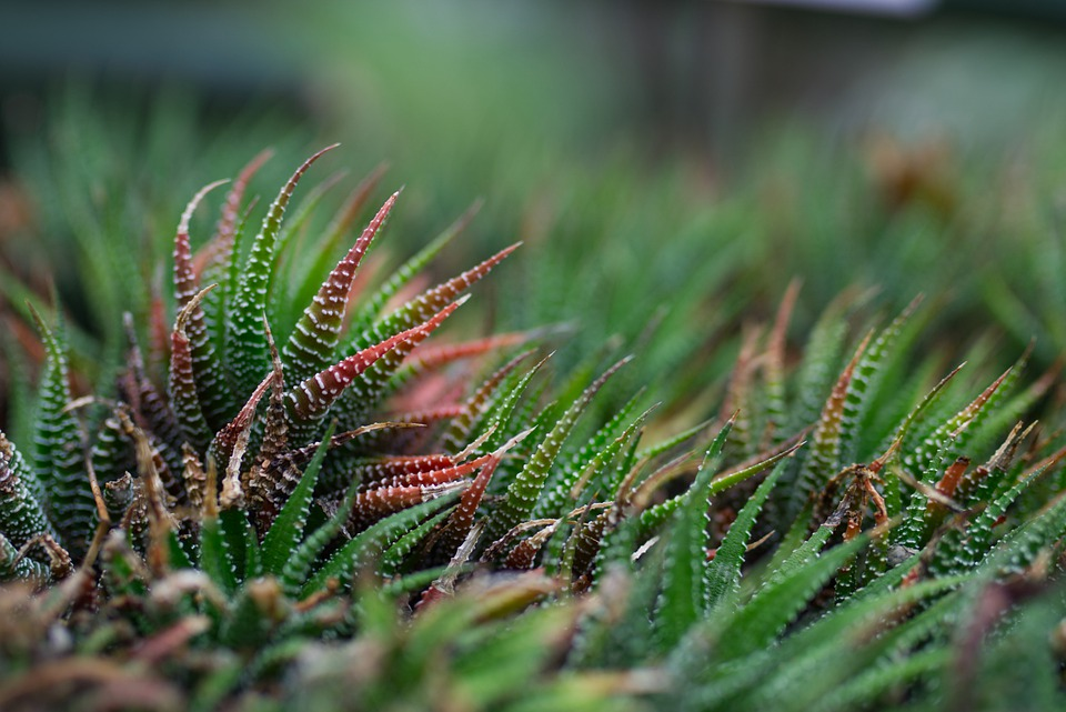 Plant, Succulent, Green, Background, Nature, Macro