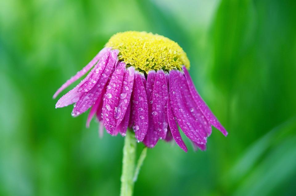 Flower, Pink, Summer, Plant, Floral, Green, Bloom, Leaf