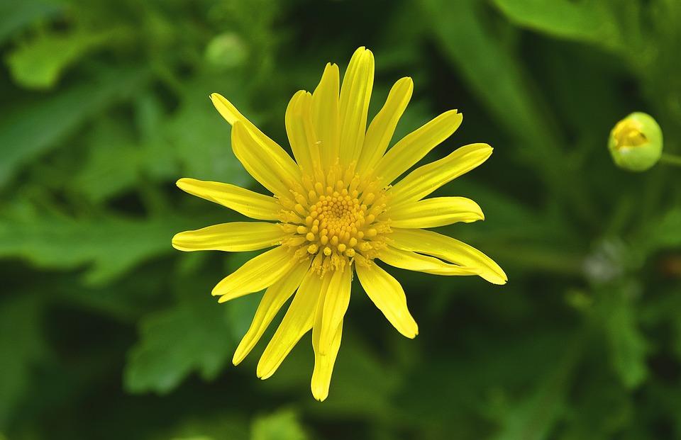 Nature, Summer, Plant, Flower