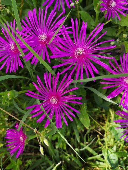 Flower, Nature, Garden, Plant, Summer, Fulfillment