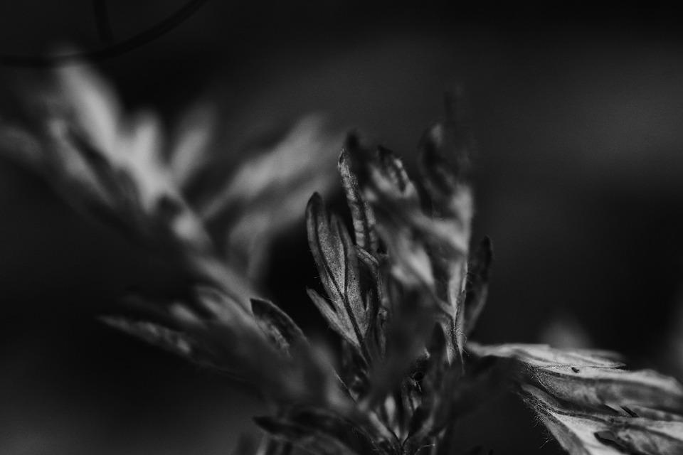 Growth, Plant, Nature, Leaf, Summer
