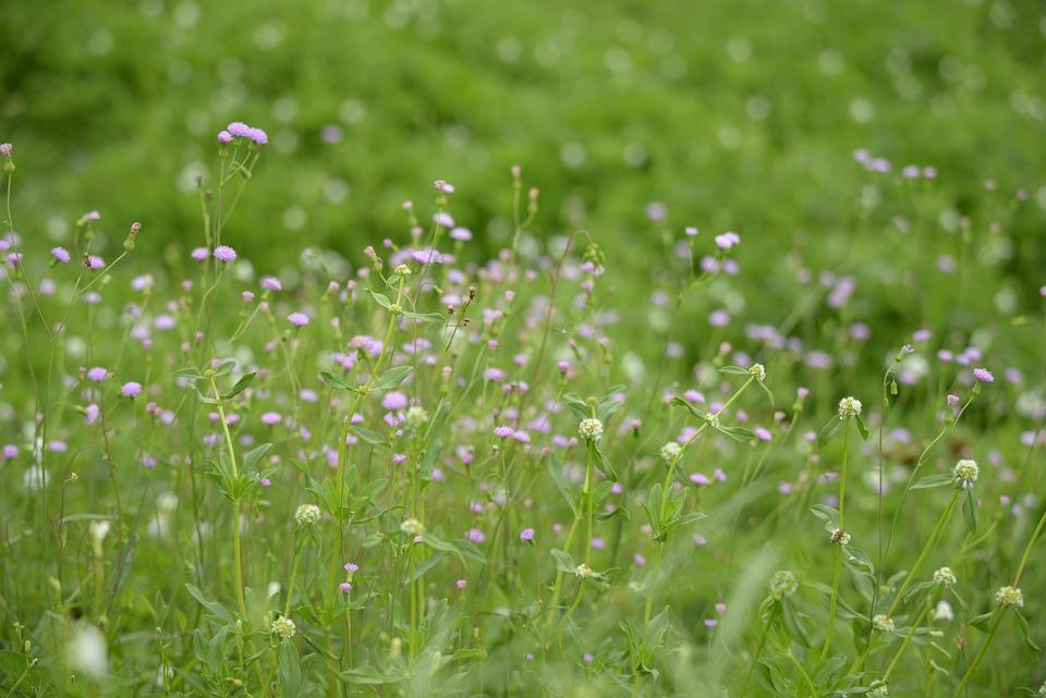 Nature, Blossom, Flower, Plant, Summer