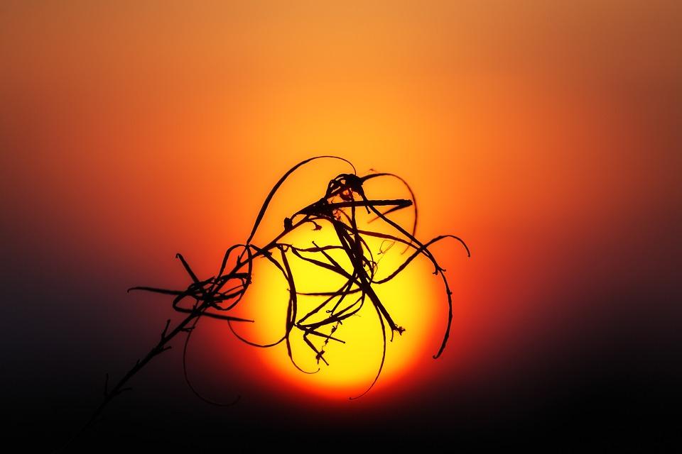 Sunset, Sun, Plant, Silhouette, Setting Sun