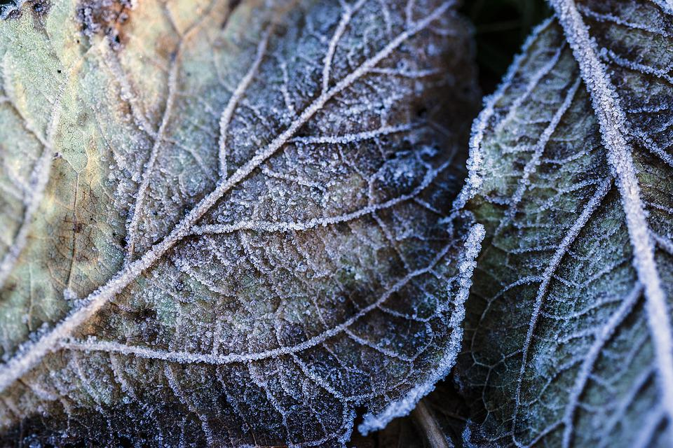 Frost, Nature, Plant, Weather, Ice, Season, Texture