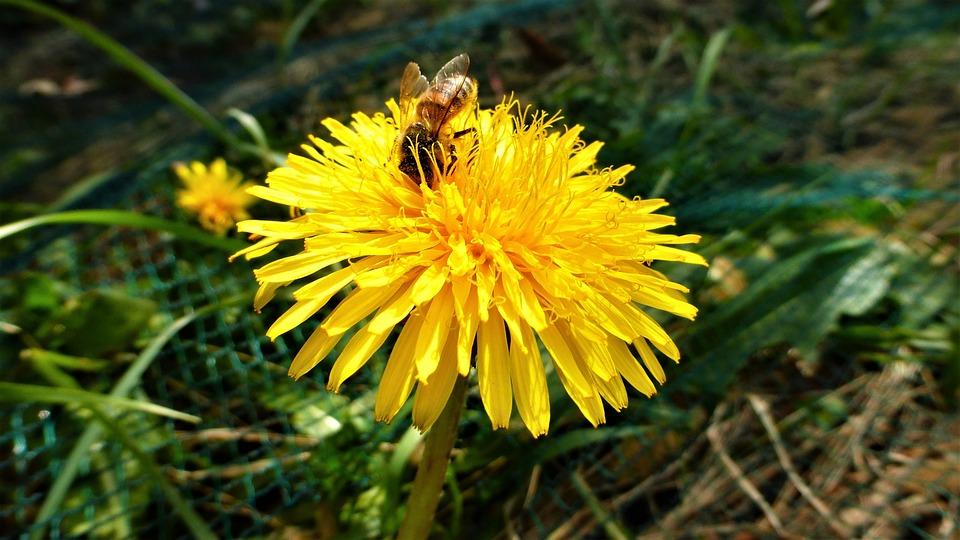 Nature, Yellow Flower, Tigist, Bee, Plant, Winter
