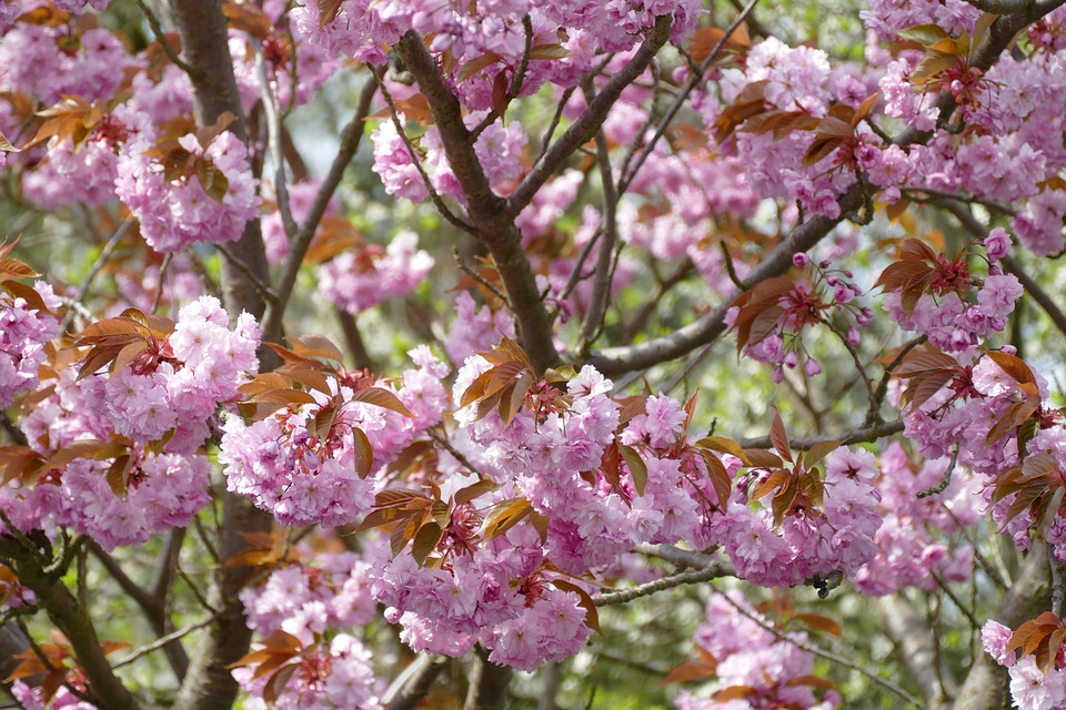 Flower, Plant, Tree, Branch