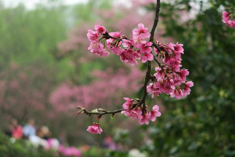 Flower, Nature, Tree, Plant