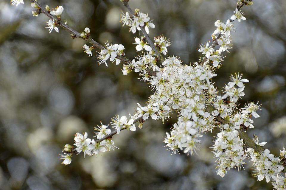Flower, Nature, Plant, Tree, Branch, Outdoor, Season