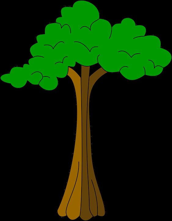 Cotton, Plant, Silk, Tree