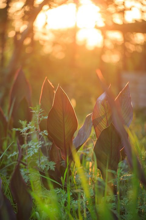 Sunset, Grass, Plant, Twilight