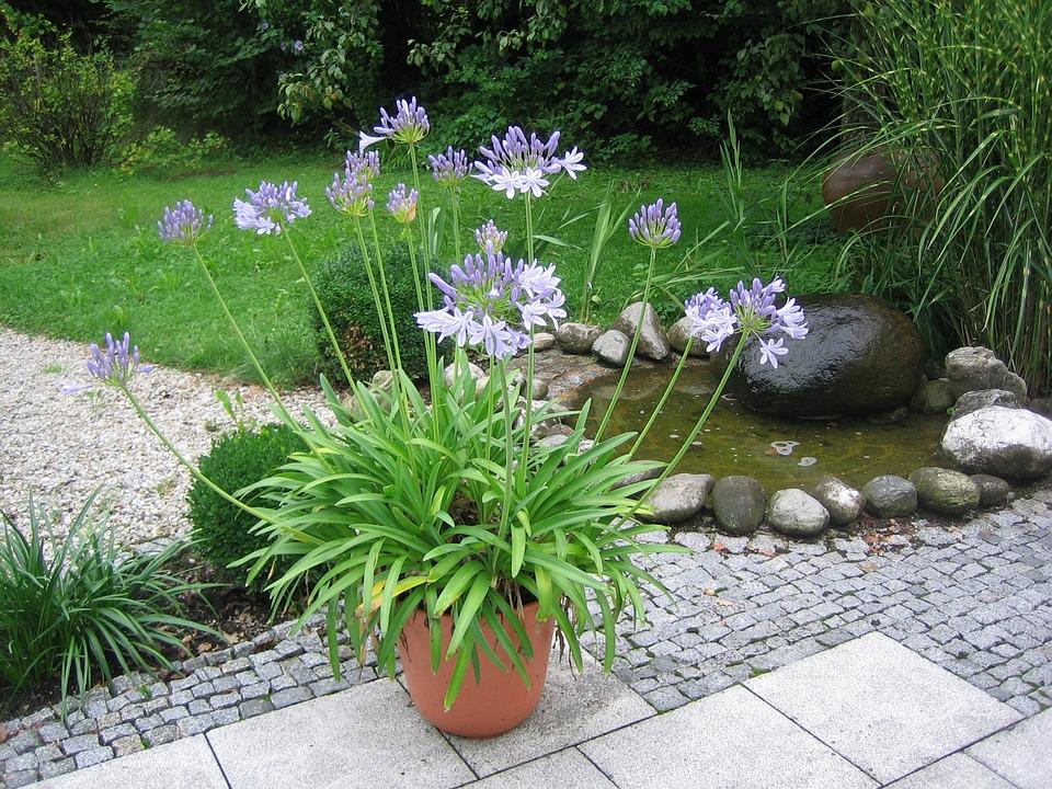 Plant, Fountain, Arrangement, Garden, Water Feature