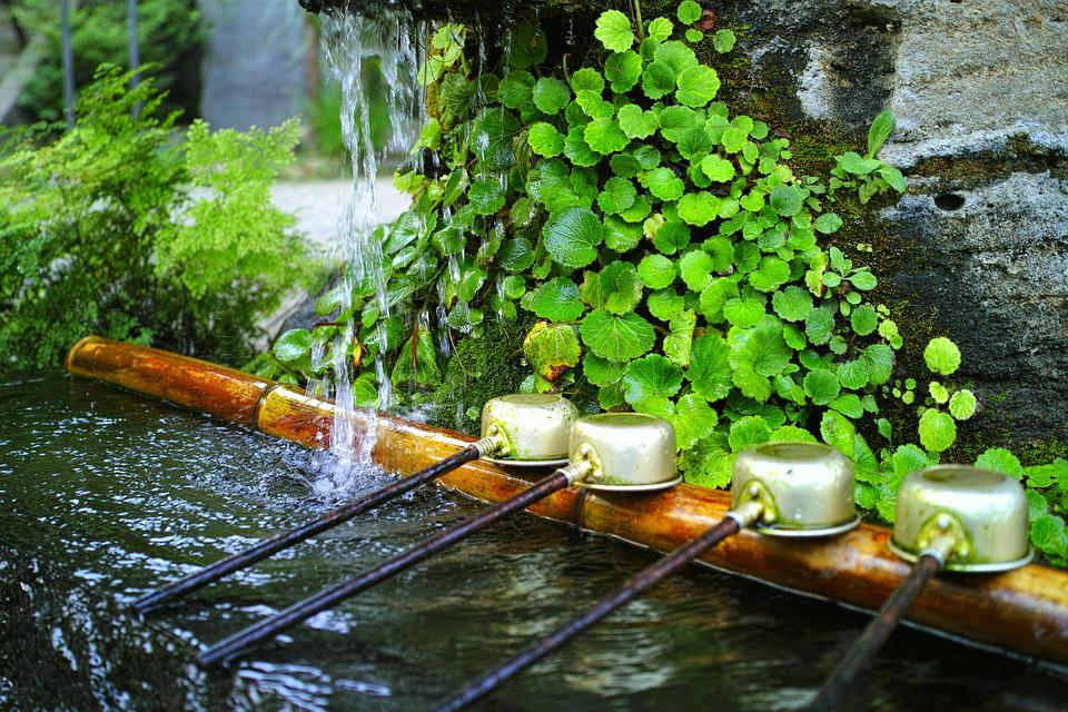 Water, Shrine, Japan, Natural, Plant, Temple