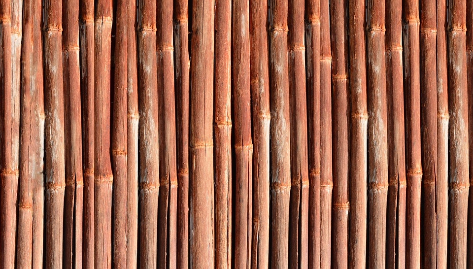 Bamboo, Wood, Garden, Plant, Aureocaulis, Bamboo Garden