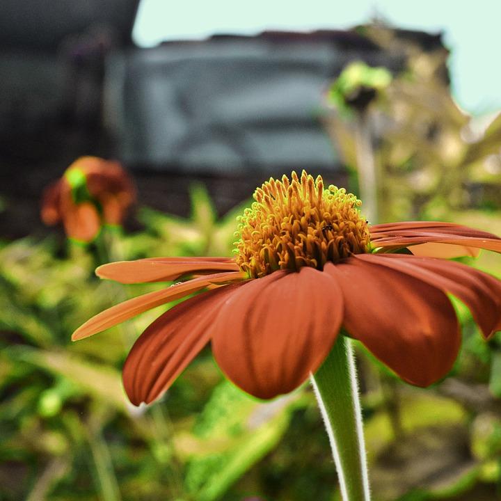 Nature, Flower, Plant, Flowering, Rosa, Garden, Yellow