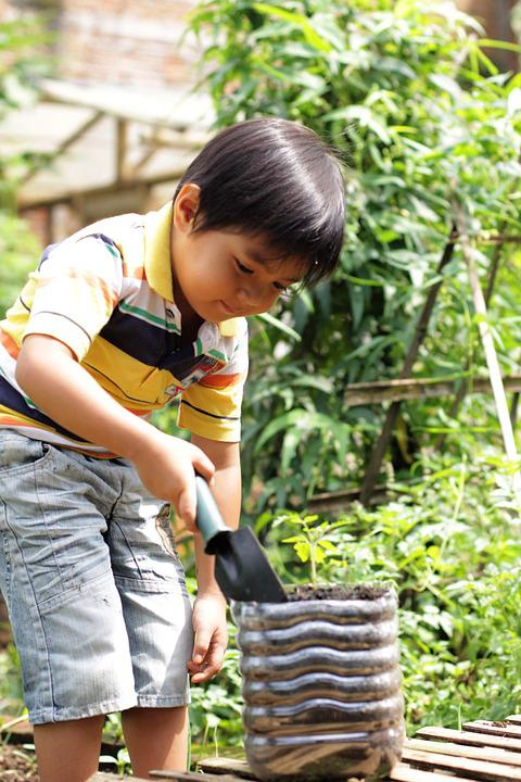 Boy, Planting, Tomato, Gardening, Growing, Plant, Young