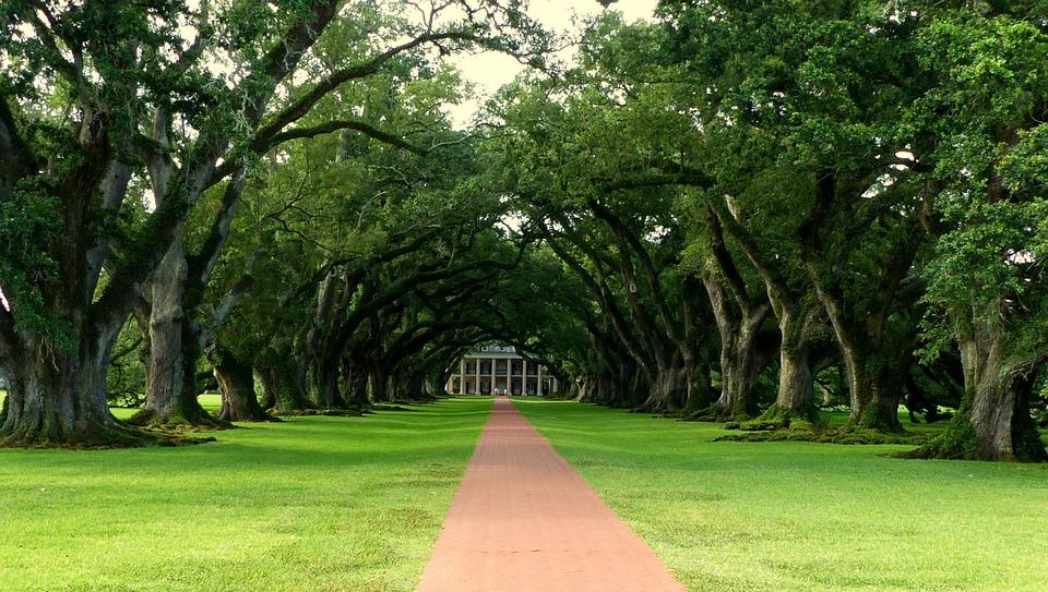 Louisiana, Plantation, America, Historically, Tree