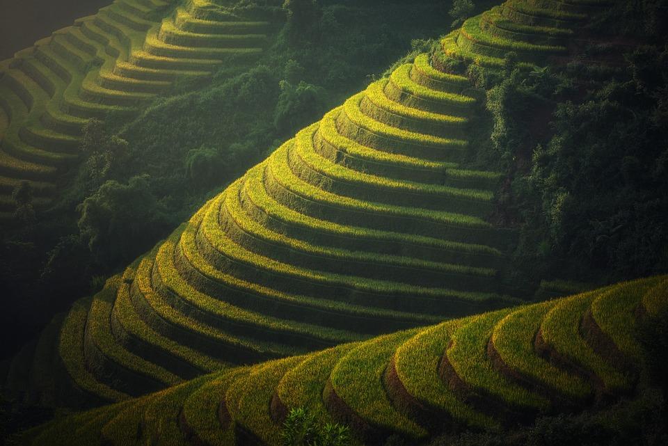 Rice Terraces, Mountains, Plantation, Rice Paddies