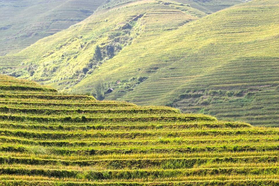 Rice, Plantation, Rice Plantations, Rice Fields, Asia