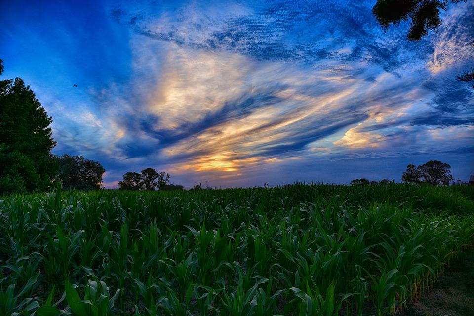 Nature, Sun, Sky, Landscape, Planting, Field, Clouds